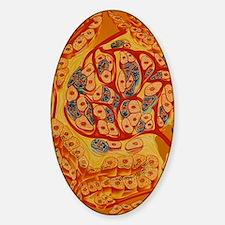 Illustration of islet of Langerhans Sticker (Oval)