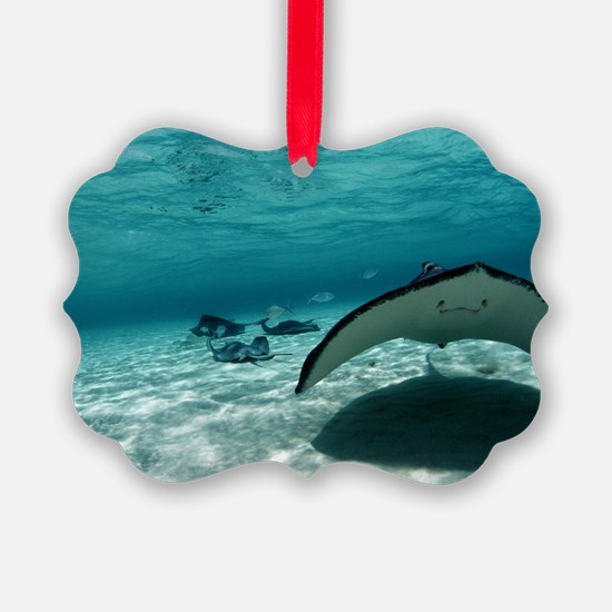 Southern stingray Ornament