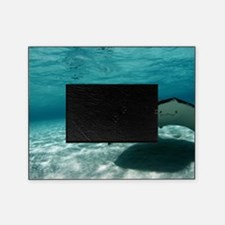Southern stingray Picture Frame