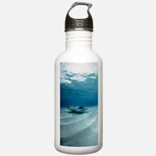 Southern stingray Water Bottle