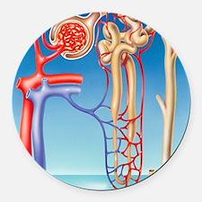 Kidney filtration system Round Car Magnet