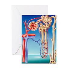 Kidney filtration system Greeting Card