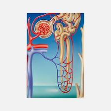 Kidney filtration system Rectangle Magnet