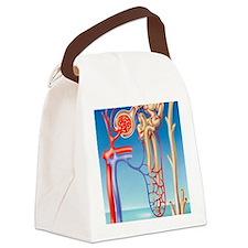 Kidney filtration system Canvas Lunch Bag