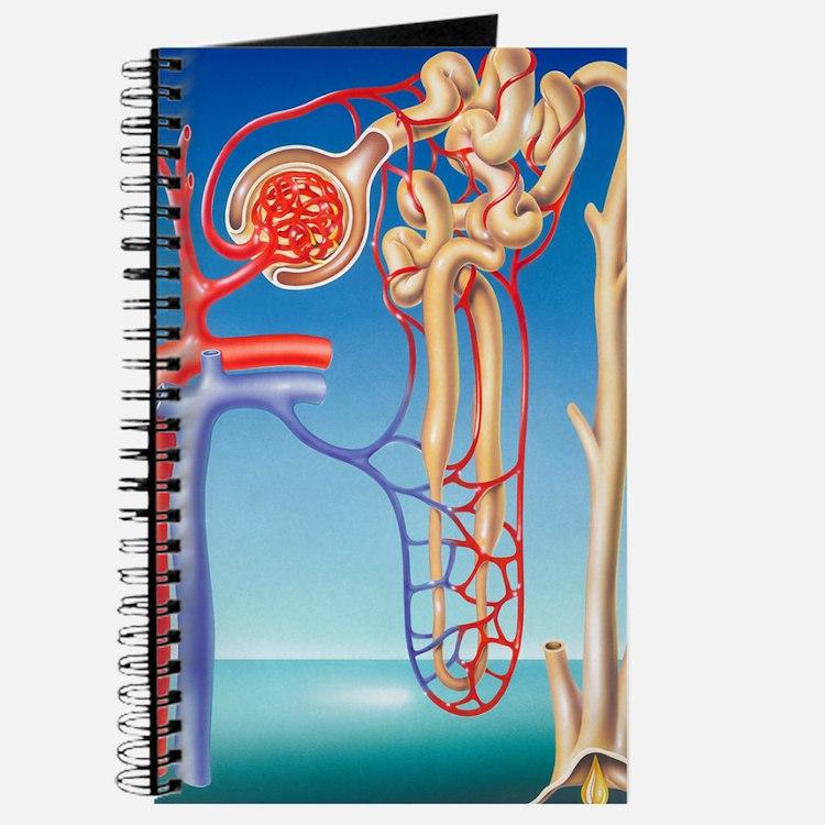 Kidney filtration system Journal