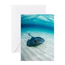 Southern stingray Greeting Card