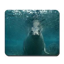 Southern elephant seal Mousepad