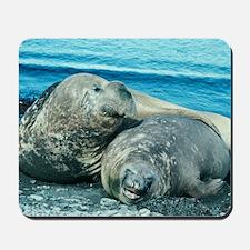 Southern elephant seals Mousepad