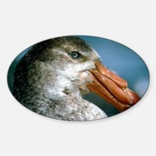 Southern giant petrel Decal