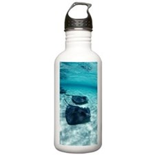 Southern stingrays Water Bottle
