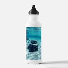 Southern stingrays Water Bottle