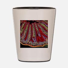 Small intestine villi, section Shot Glass