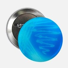 """Bacterial culture 2.25"""" Button"""