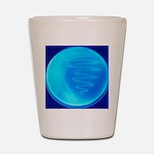 Bacterial culture Shot Glass