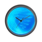 Microbiology Basic Clocks