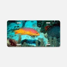 Spanish hogfish Aluminum License Plate