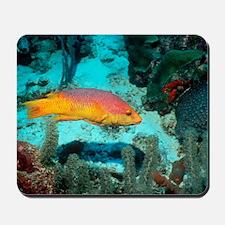 Spanish hogfish Mousepad