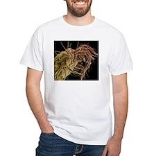Spider mite, SEM Shirt