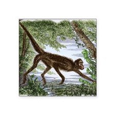 "Spider monkey, historical a Square Sticker 3"" x 3"""