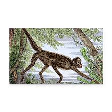 Spider monkey, historical art Rectangle Car Magnet