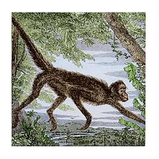 Spider monkey, historical artwork Tile Coaster