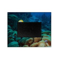 Spotfin butterflyfish Picture Frame