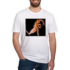 Springtail, SEM Shirt