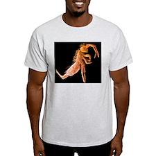 Springtail, SEM T-Shirt
