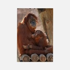 (10) Orang Mother  Child 7372 Rectangle Magnet