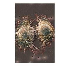 Cancer cell division Postcards (Package of 8)