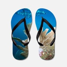 Spotted dolphins Flip Flops