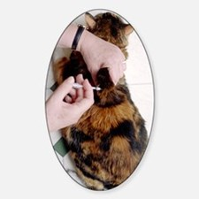 Cat insulin injection Decal