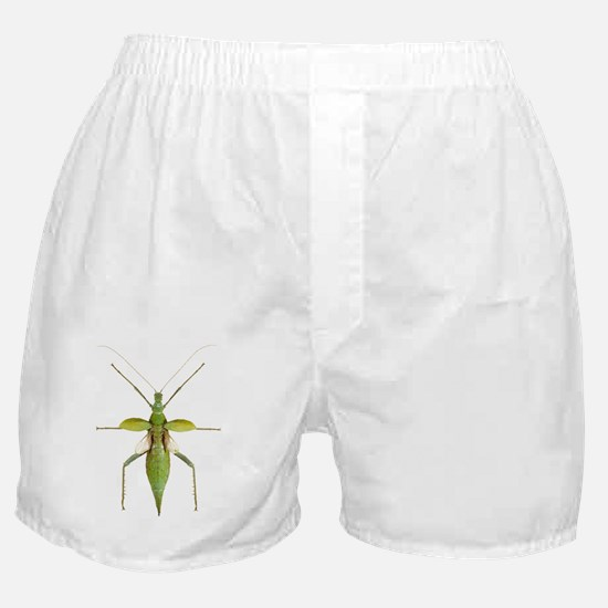 Stick insect Boxer Shorts