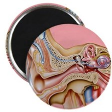 Cochlear implant, artwork Magnet