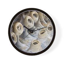 Squid suckers, SEM Wall Clock
