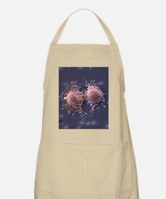 Cancer cell division Apron