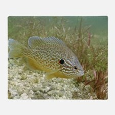 Sunfish hybrid Throw Blanket