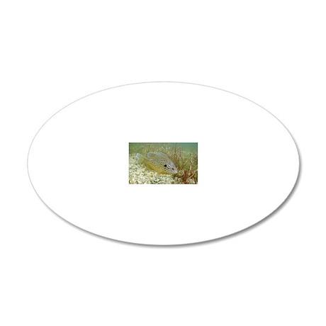 Sunfish hybrid 20x12 Oval Wall Decal