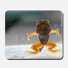 Tadpole metamorphosis Mousepad