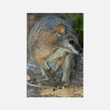 Tammar wallaby Rectangle Magnet