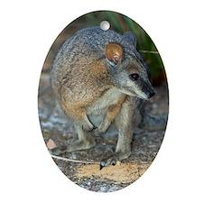Tammar wallaby Oval Ornament
