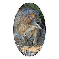 Tammar wallaby Decal