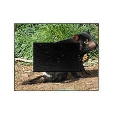 Tasmanian devil Picture Frame