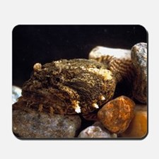 Toadfish Mousepad