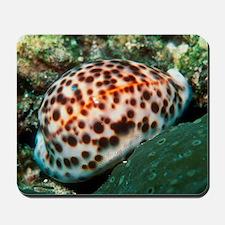 Tiger cowrie sea snail Mousepad