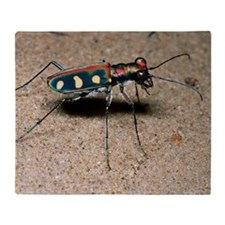 Tiger beetle Throw Blanket