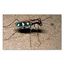 Tiger beetle Decal