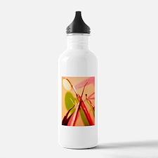 Dentistry equipment Water Bottle