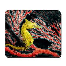 Thorny seahorse Mousepad