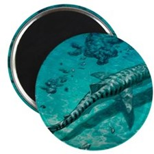 Tiger shark Magnet